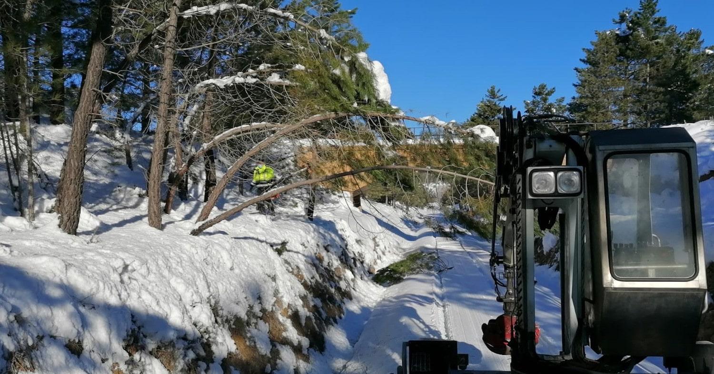 Trabajos de retirada de árboles entre Cuenca y Utiel antes del deshielo. Foto cortesía de Adif.